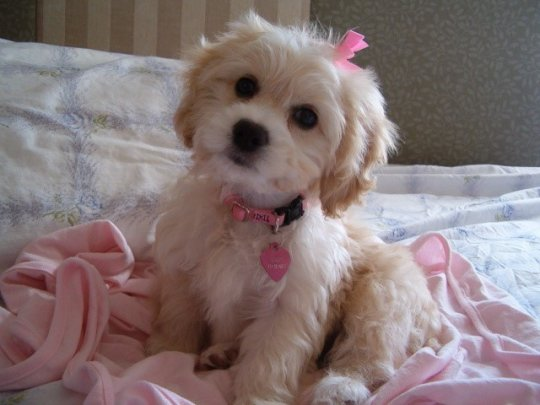 The 8 Cutest Dog Breeds That Ever Existed You Can T Resist This